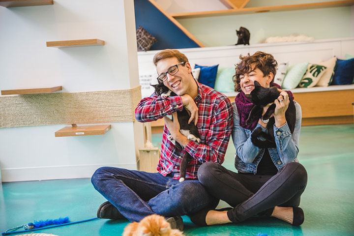 Sweet Engagement Session At A Cat Cafe